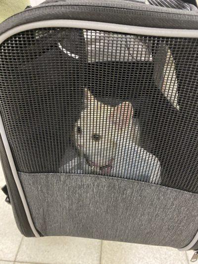 猫迎える初日