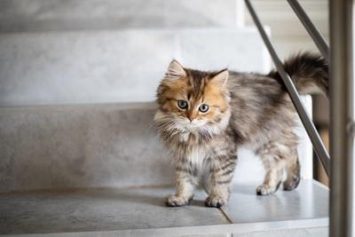 トイレどこ行った猫ケージ