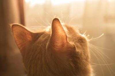 猫を飼い始めて変わったこと7選