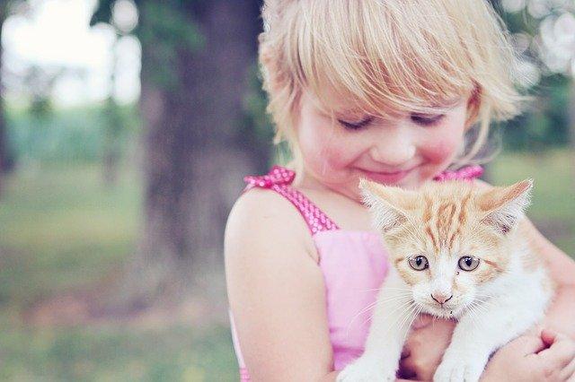 子猫の餌の量と上げ方のポイント